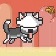 Mr Jump Husky